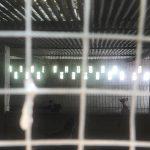 Galgos del Sur denuncia que 200 perros de caza malviven en condiciones deplorables en unas perreras de Córdoba